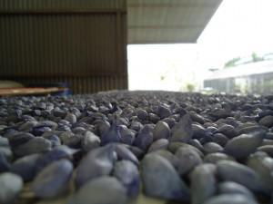 semillas curadas (4)