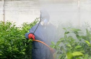 tratamiento fitosanitario